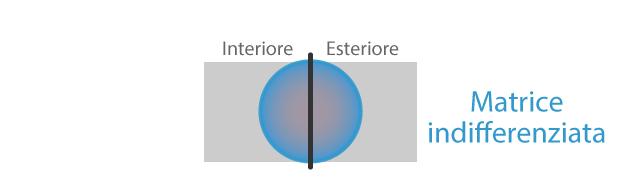 F1-matrice-indifferenziata