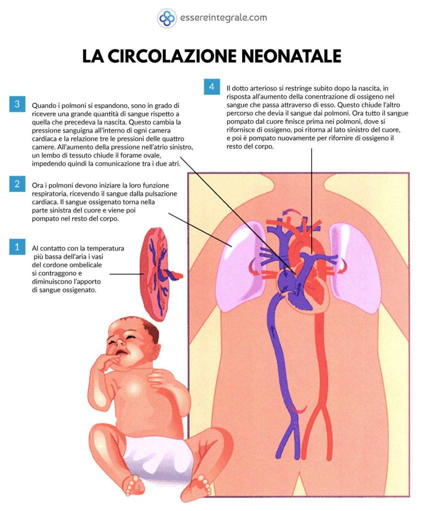 La circolazione sanguigna neonatale - primo respiro