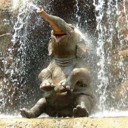 guidatore,elefante