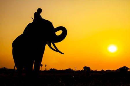 L'elefante e il guidatore
