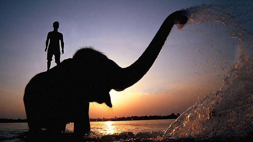 Il guidatore e l'elefante: una visione integrata